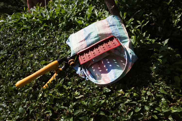 Scissors on plastic sack over tea crops