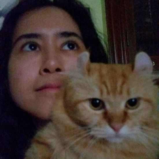 #curly #kinkalow #cats #instacats