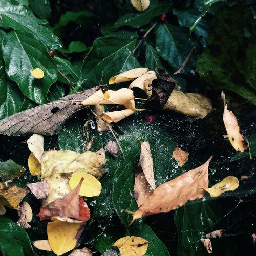 Taking Photos Leaves Wet Web