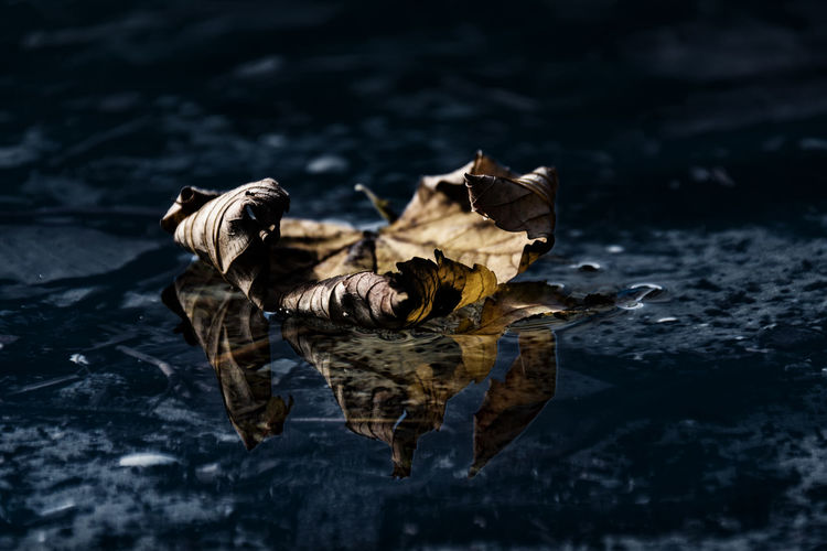 Close-Up Of Leaves Floating On Water
