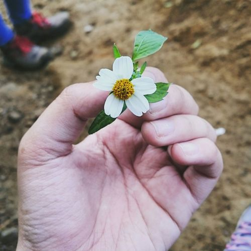 Handinframe Flowers Hanging Out Taking Photos Jalan2men Mountain Hiking Enjoying Life EyeEm Best Shots EyeEm Nature Lover Nature