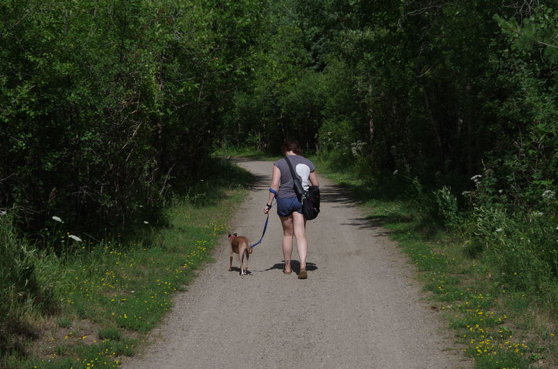Rear view of woman with dog walking on footpath amidst trees