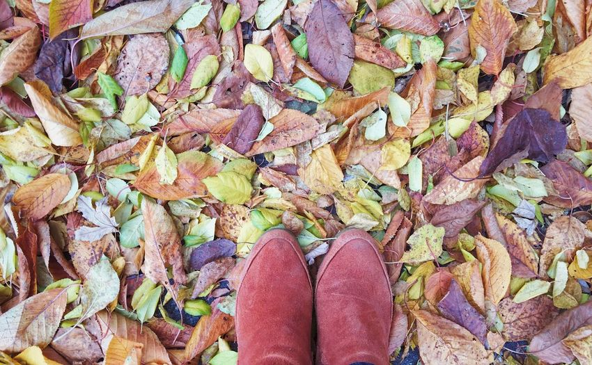 Low section of person standing on autumn leaves
