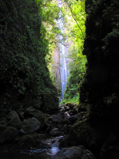 Kipahulu, Maui, Hawaii. Beauty In Nature Day Flowing Water Forest Freshness Growth Moss Motion Nature No People Outdoors Power In Nature Rock - Object Rock Formation Scenics Stream - Flowing Water Tranquil Scene Tree Water Waterfall