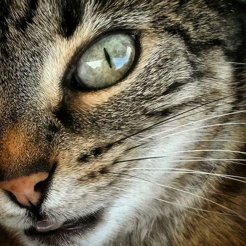 She's called Daisy Cats Pets Animals