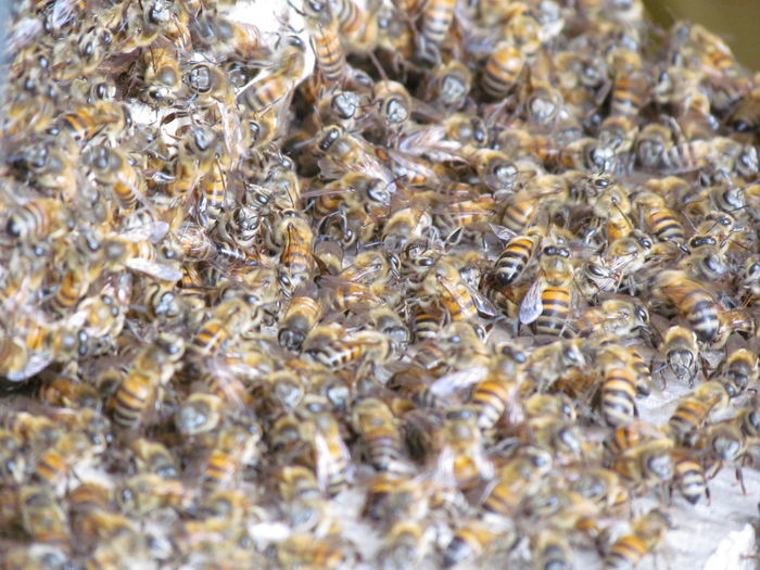 Large Group Of Animals Animal Themes Full Frame Insect Colony Nature No People Backgrounds Animals In The Wild Animal Wildlife Close-up Outdoors Honeycomb Day Beauty In Nature Bee Abelhas Beautiful Nature EyeEm Yellow Yellow Color