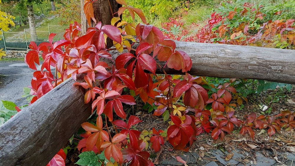 Nature Autumn Beauty In Nature Flower Red Day 3XPUnity 3XSPUnity 3XSPhotographyUnity Nature Beauty In Nature