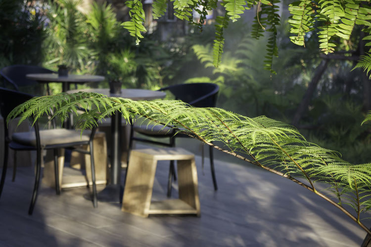 Empty chairs and tables against trees