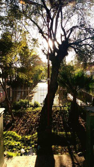 Av.tarapaca ...lugar escondido . Un pequeñisimo paraíso pero que pena que no lo sepan cuidar , la contaminacion me sorprendió. Sun Effect / Tree