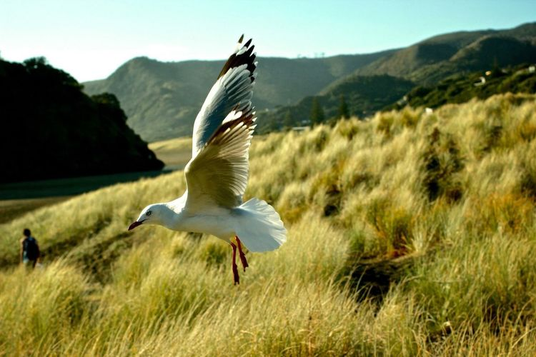 Scenic View Of Seagull Flying Over Meadow Against Cloudy Sky