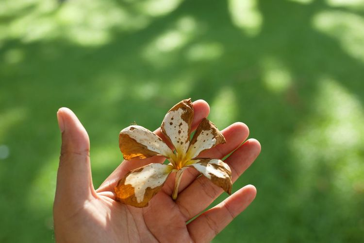 Cropped Hand Holding Flower Over Grassy Field