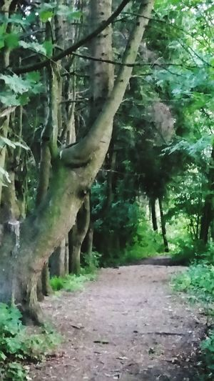 Feel The Journey Tree_collection  Beautiful Nature Amazing Place Adventure Club Amazing Nature Tree Trunk Bizzar Tree Naturelovers
