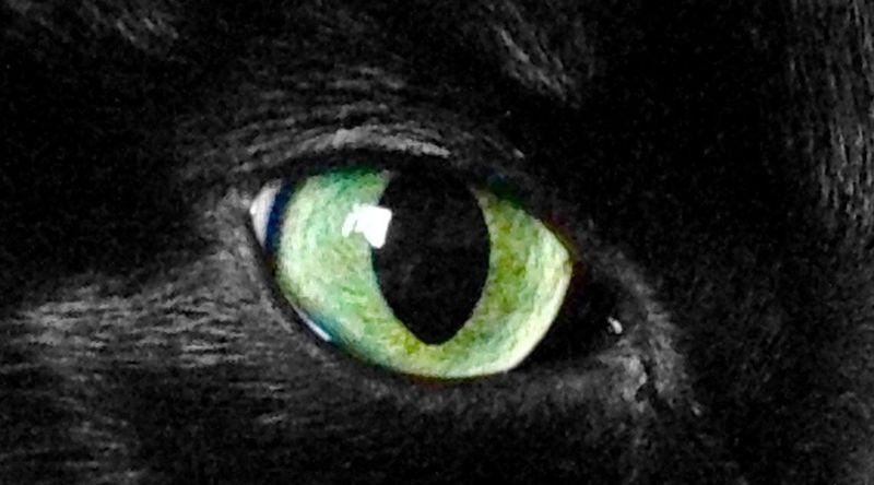 Cat Eye Eye Close Up Green Color Animal Animal Eye Extreme Close-up No People Cat Pet