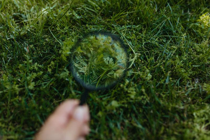 Human hand holding grass
