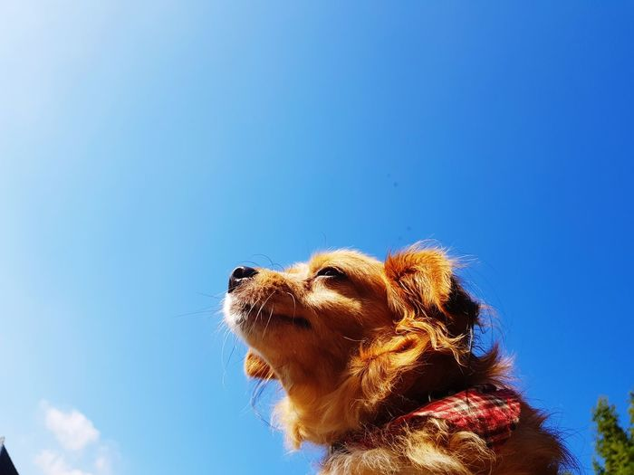 One Animal Low Angle View Pets Dog Outdoor Animal Animal Themes Animal Head  Sky Blue Day Nature Outdoors