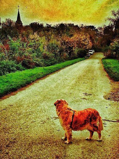 Bruno, waiting.