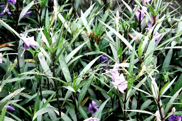 plant and flowers Flower Growth Plant Nature Beauty In Nature Purple Petal Blooming Leaf Freshness Day Green Color Outdoors Close-up Flower Head No People Crocus Fragility
