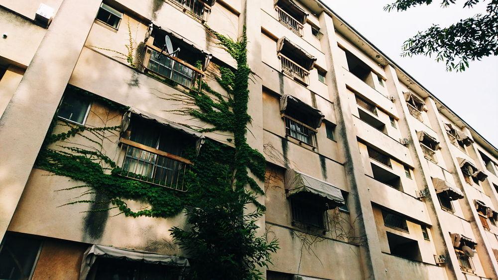 廃墟 Remains 蔦 つた マンション Mansion 錆 アパート Apartment