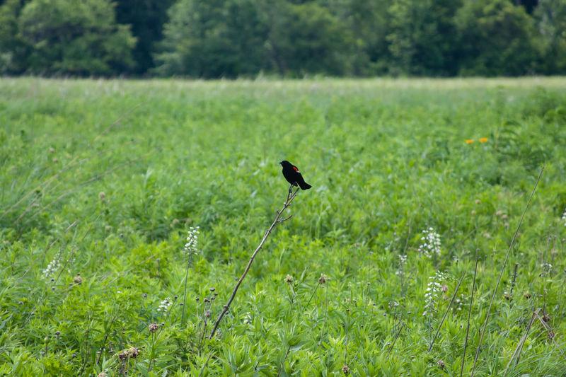 Bird flying over field