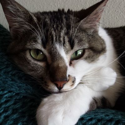 She's pretty much a model. Izzykitty Greeneyes Sleepykitty  Catportrait nofilter