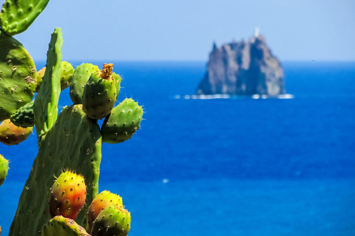 Prickly pears during the summer in the island of Stromboli Background Blue Cacturs Close Up Close-up Ficus Indica Fruits Island Italy Mediterranean  Opuntia Outdoors Plant Plant Prickly Prickly Pear Sea Sea Stack Sicily Stromboli Strombolicchio Summer Thorn Water