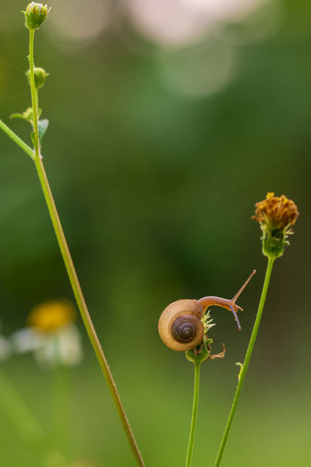 Snails in garden Snail Snail Shell Bokeh Close-up Nature No People Snail In Garden Snail And Flowers Snail Collection Snail In Grass Snail Photography Snails And T Snails In The Rain Snails Pace Snail🐌