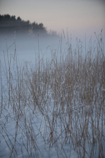 Nature Nature Photography Taking Photos Tranquility Tree Winter Fog Nature_collection Night No People Tranquil Scene