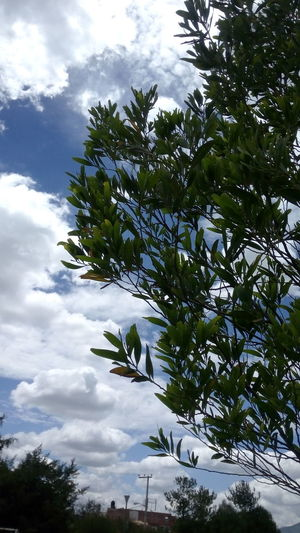 Relaxing Taking Photos Sky Sky And Clouds Sky_collection Enjoying Life Hanging Out Hello World Naturaleza Photography Photooftheday