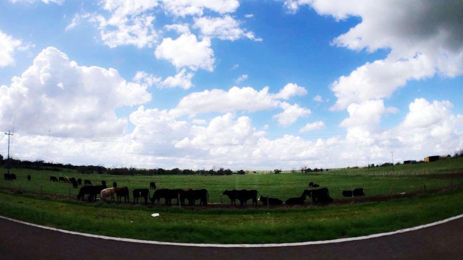 Clouds Countryside Texas Texas Sky Texas!!!! Texas Made Texas Landscape Landscape Cows Grass
