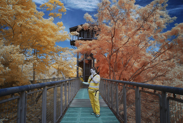 A perspective infrared view of a man on a metal hanging bridge surrounded by colourful foliage trees. Infrared Architecture Autumn Beauty In Nature Branch Built Structure Change Color Infrared Colorful Foliage Day Footbridge Full Length Infrared Photography Landscape Leaf Nature One Person Outdoors Railing Real People Scenics Standing Tranquil Scene Tree Yellow