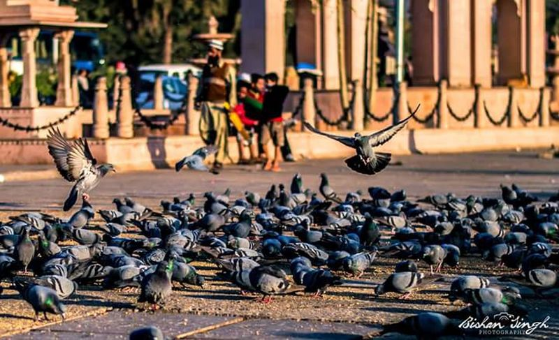 Morning View Winter_collection Sunrise_Collection 2016😍 Taking Photos ❤ Sunlight ☀ Check This Out Birds🐦 People Watching Jaipurdiaries🎀 Rajasthan Jaipur India