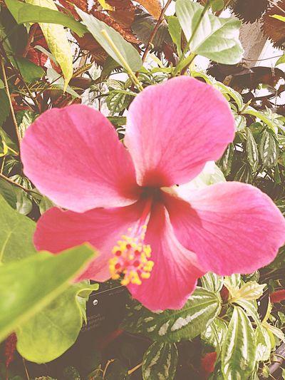 Flowers Plants Blume Planzen Pink Green Grün London Kew Gardens Uk