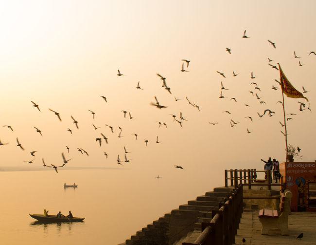 Flock of birds flying over ganges river
