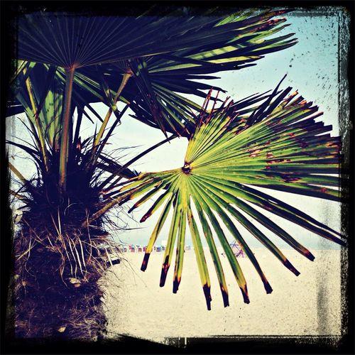 Tropical Feelings at the Beach