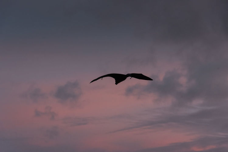 Low angle view of silhouette bird flying against sky
