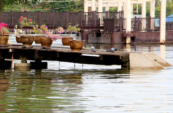 The waterfront wooden and decorated with potted plants in Thailand. Hope Hopeful Bird Waterfront Shadow Morning Light Thailand Travel Autumn Summer Holiday Healthcare Healthy Relax Refreshing :) Living Water River Simple Rural Post Water Outdoors Day Flower No People Building Exterior Architecture Nature