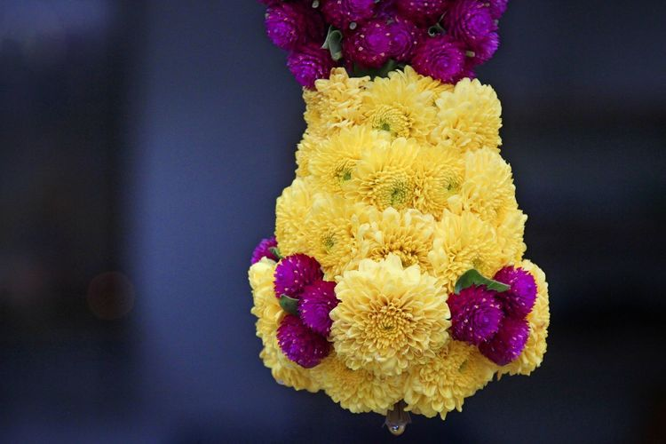 Close-Up Of Yellow And Purple Floral Garland