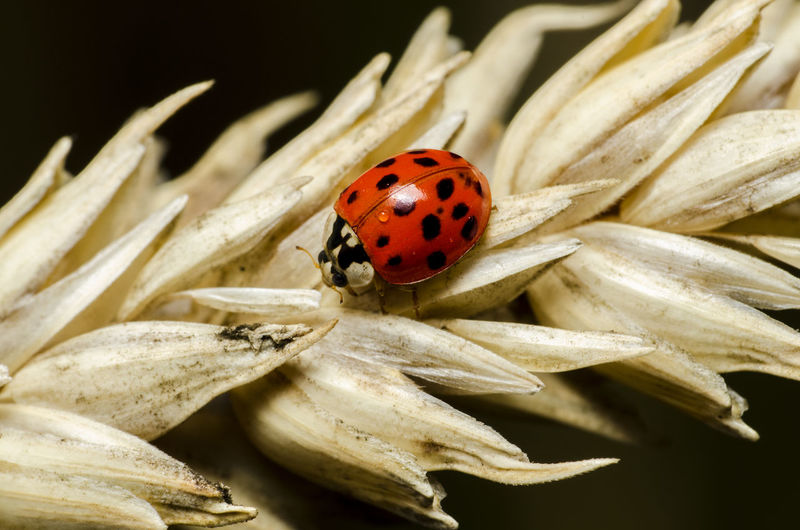 Beauty In Nature Close-up Insect Insect Photography Ladybug Macro Macro Nature Macro Photography Macro_collection Macrophotography Nature Nature Nature Photography
