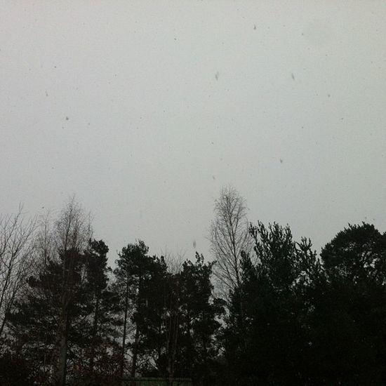 Començo l'any amb neu - Empiezo el año con nieve - New Year and Snow Lareki Lareki2013
