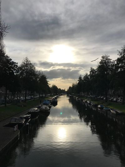 Amsterdam Canal Bridge Flying Bird Water Reflection Flying Bird In Sky Nature Cloud - Sky Sunshine Outdoors No People Cars Boats EyeEmNewHere