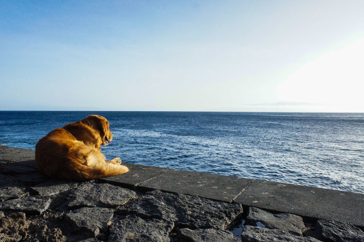 Waiting for Animal Themes Beach Beauty In Nature Clear Sky Dog Domestic Animals Horizon Over Water No People One Animal Pets Relaxation Scenics Sea Tranquility Water
