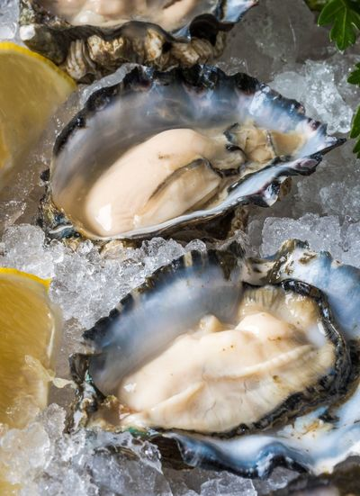 Close-up of oysters on crushed ice
