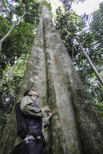 Timber Borneo Borneo Island Forest Huge Tree Nature Nature One Man Only One Person Outdoors Survivor Island Tall Tree Timber Tree Tree Tropical Forest