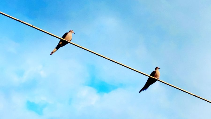 Doves on a wire Photography Birds Nature Spring Pittston Wildlife Wilkes-Barre Blue Blue Sky Sky Abstract Dove Doves Minimalism