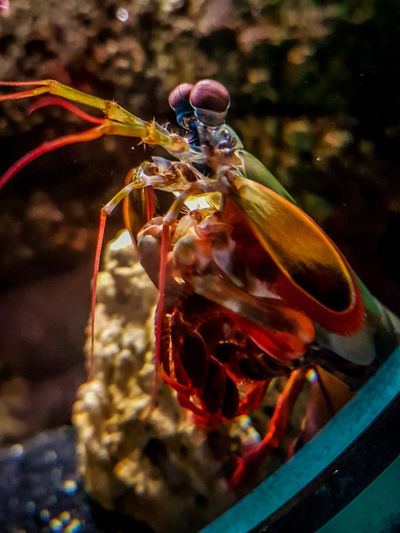 Sea Life Aquarium Sealife UnderSea Animal Themes Beauty In Nature Close-up Day No People Sea Sea Life Sealifeaquarium Sealifecentre Underwater underwater photography