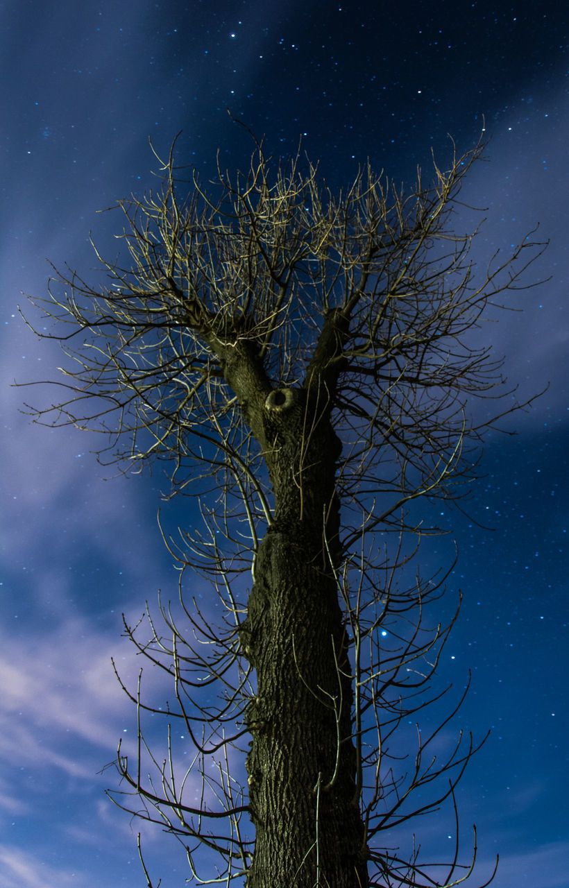 plant, tree, sky, low angle view, nature, growth, tree trunk, trunk, branch, beauty in nature, bare tree, no people, night, tranquility, blue, star - space, cloud - sky, outdoors, scenics - nature, dead plant, astronomy, moonlight