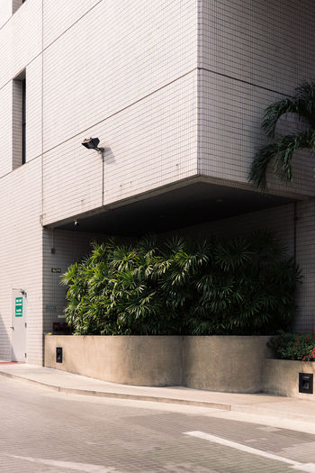 Architecture Botany Building Exterior Built Structure City City Life Green Growth Minimal Minimalist Architecture Modern No People Outdoors Palm Tree Plants Tiles Tree The Architect The Architect - 2017 EyeEm Awards
