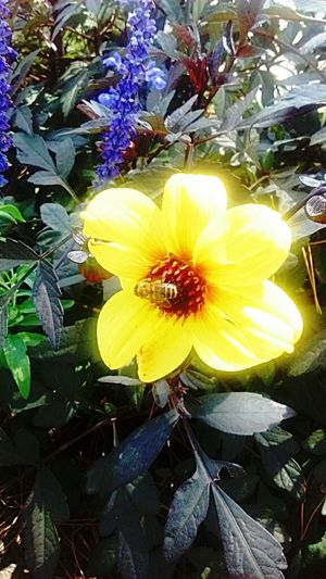 Busy bee EyeEm Nature Lover The Flowers Series Pollen Workerbee Beautiful Day