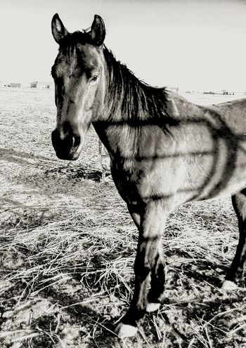 Ranch horses Lifestyle Rural Corral Working Animal Ranch Horse Outdoors Barn Farm Cowboy Country Livestock Pony Animal Themes Western Monochrome Pasture Equine Stable Mane Rural_living Calvary Stallion Hoof Stud The Week On EyeEm