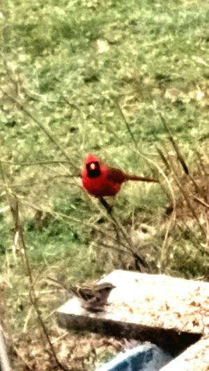 Close-up of bird perching on red